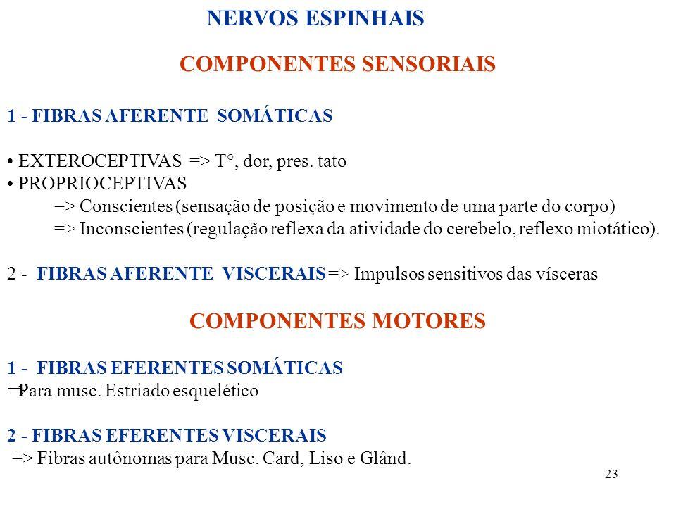23 COMPONENTES SENSORIAIS 1 - FIBRAS AFERENTE SOMÁTICAS EXTEROCEPTIVAS => T°, dor, pres. tato PROPRIOCEPTIVAS => Conscientes (sensação de posição e mo