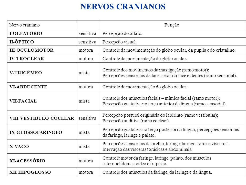 27 Nervo craniano Função I-OLFATÓRIOsensitivaPercepção do olfato. II-ÓPTICOsensitivaPercepção visual. III-OCULOMOTORmotoraControle da movimentação do