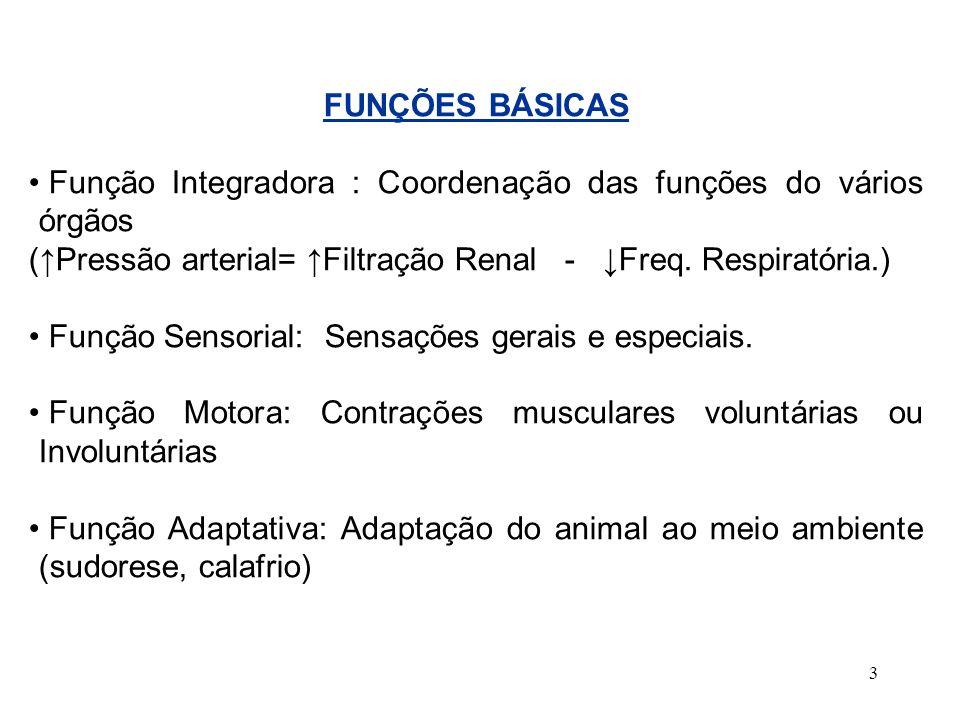 3 FUNÇÕES BÁSICAS Função Integradora : Coordenação das funções do vários órgãos (Pressão arterial= Filtração Renal - Freq. Respiratória.) Função Senso