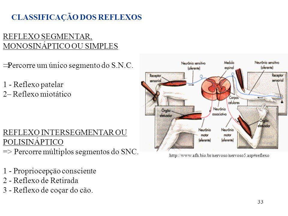 33 CLASSIFICAÇÃO DOS REFLEXOS REFLEXO SEGMENTAR, MONOSINÁPTICO OU SIMPLES Percorre um único segmento do S.N.C. 1 - Reflexo patelar 2– Reflexo miotátic