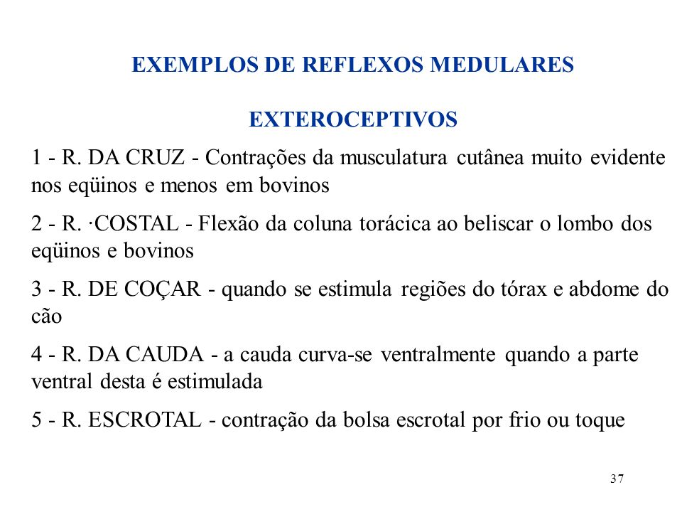 37 EXEMPLOS DE REFLEXOS MEDULARES EXTEROCEPTIVOS 1 - R. DA CRUZ - Contrações da musculatura cutânea muito evidente nos eqüinos e menos em bovinos 2 -