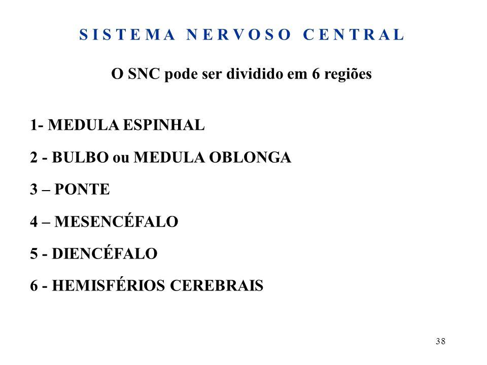 38 S I S T E M A N E R V O S O C E N T R A L O SNC pode ser dividido em 6 regiões 1- MEDULA ESPINHAL 2 - BULBO ou MEDULA OBLONGA 3 – PONTE 4 – MESENCÉ