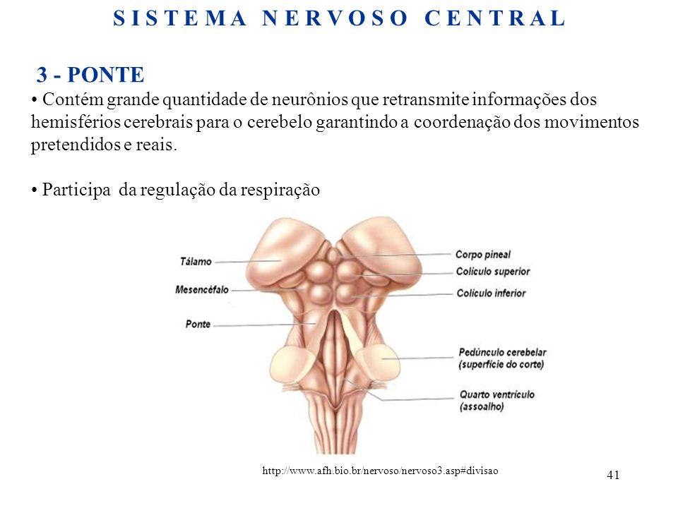 41 3 - PONTE Contém grande quantidade de neurônios que retransmite informações dos hemisférios cerebrais para o cerebelo garantindo a coordenação dos