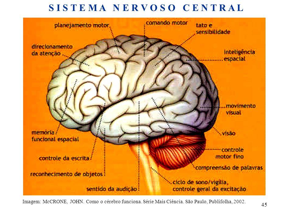 45 Imagem: McCRONE, JOHN. Como o cérebro funciona. Série Mais Ciência. São Paulo, Publifolha, 2002. S I S T E M A N E R V O S O C E N T R A L