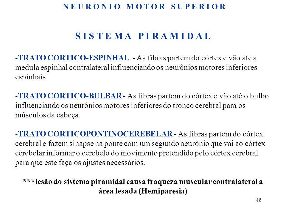 48 S I S T E M A P I R A M I D A L -TRATO CORTICO-ESPINHAL - As fibras partem do córtex e vão até a medula espinhal contralateral influenciando os neu