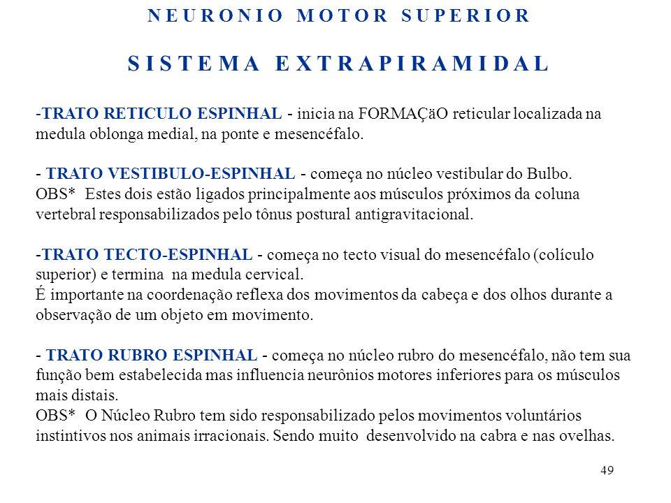 49 S I S T E M A E X T R A P I R A M I D A L -TRATO RETICULO ESPINHAL - inicia na FORMAÇäO reticular localizada na medula oblonga medial, na ponte e m