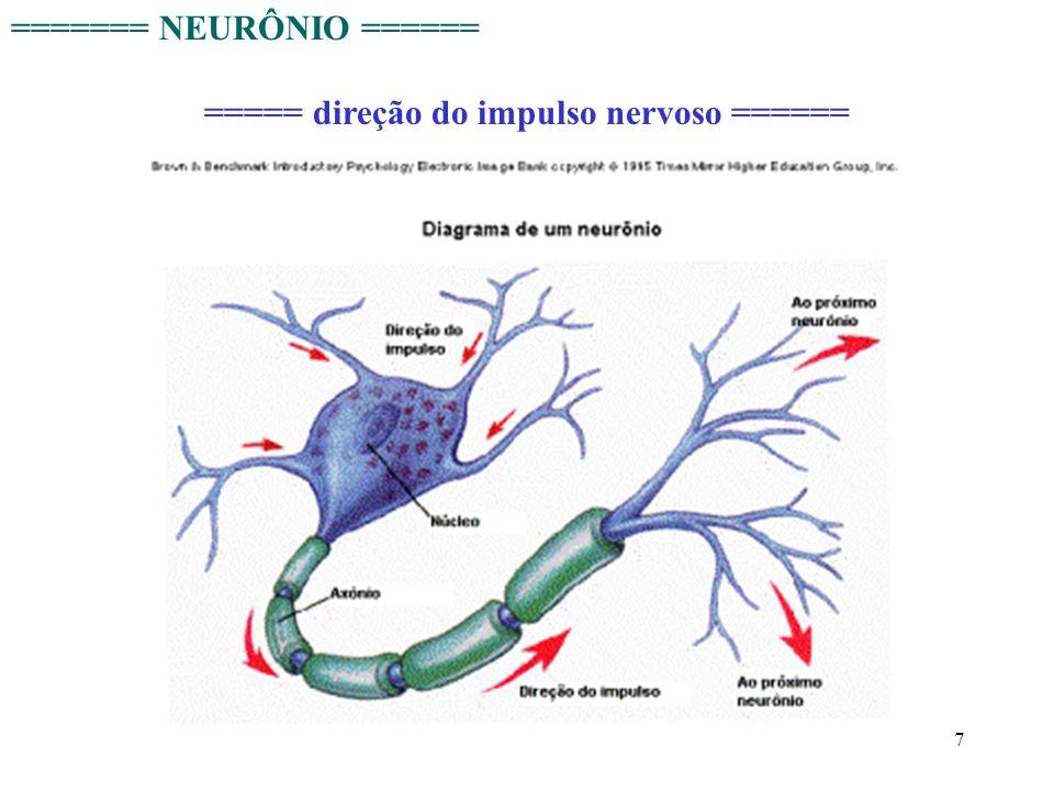 7 ======= NEURÔNIO ====== ===== direção do impulso nervoso ======