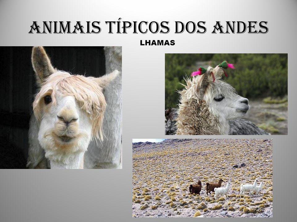 Animais típicos dos Andes LHAMAS