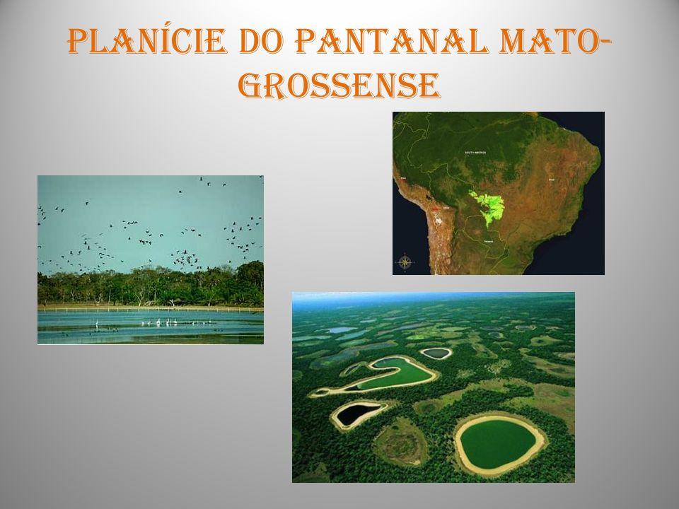 Planície do pantanal mato- grossense