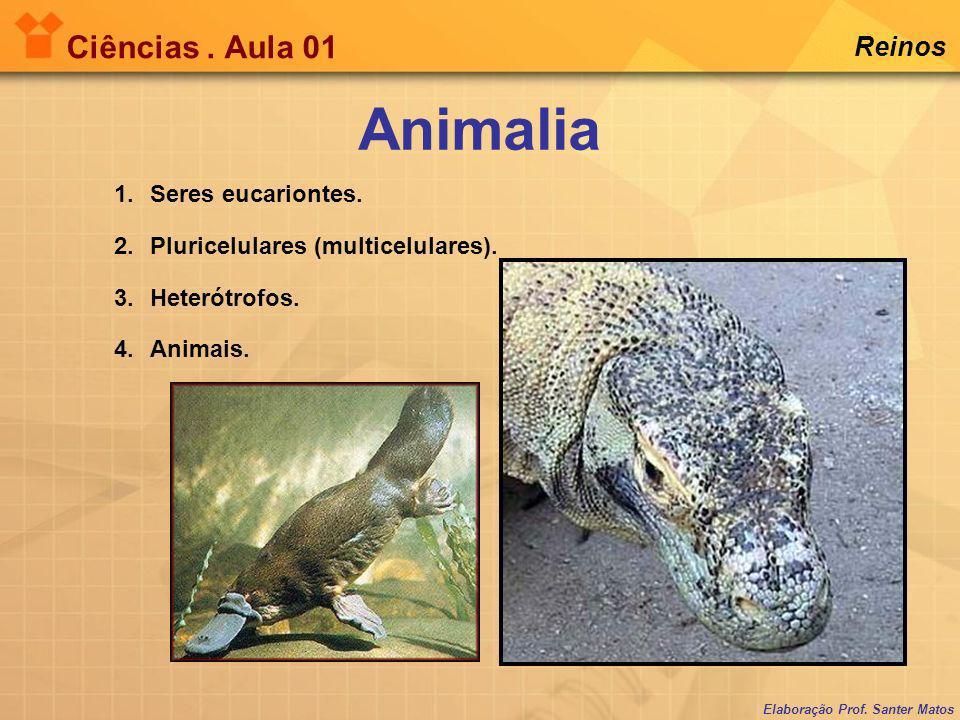 Elaboração Prof. Santer Matos Ciências. Aula 01 Reinos 1.Seres eucariontes. 2.Pluricelulares (multicelulares). 3.Heterótrofos. 4.Animais. Animalia