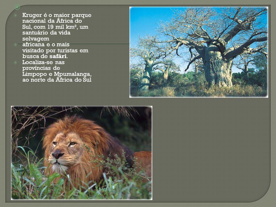 Kruger é o maior parque nacional da África do Sul, com 19 mil km², um santuário da vida selvagem africana e o mais visitado por turistas em busca de s