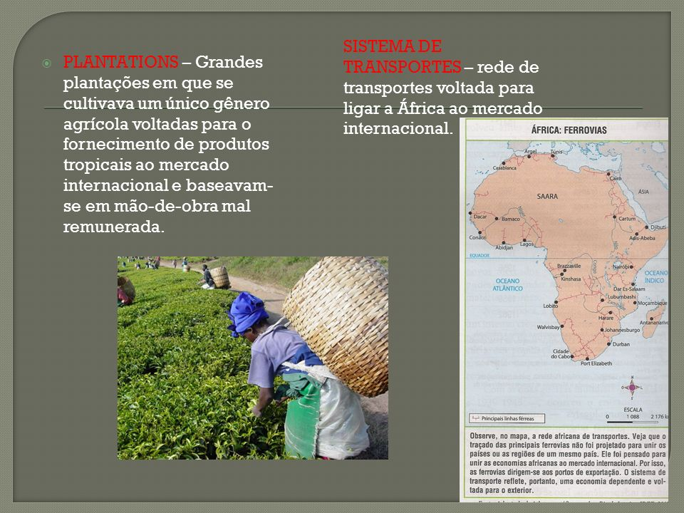 PLANTATIONS – Grandes plantações em que se cultivava um único gênero agrícola voltadas para o fornecimento de produtos tropicais ao mercado internacio