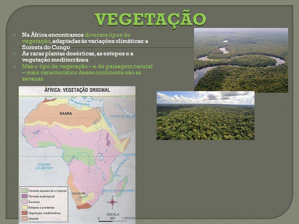 Na África encontramos diversos tipos de vegetação, adaptadas às variações climáticas: a floresta do Congo As raras plantas desérticas, as estepes e a