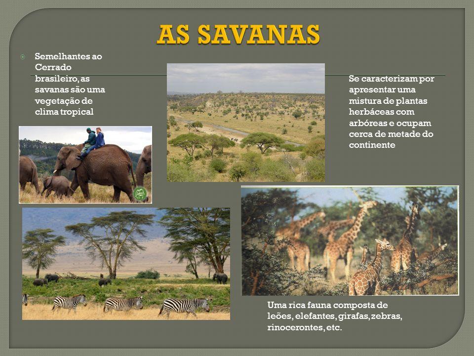 Semelhantes ao Cerrado brasileiro, as savanas são uma vegetação de clima tropical Se caracterizam por apresentar uma mistura de plantas herbáceas com