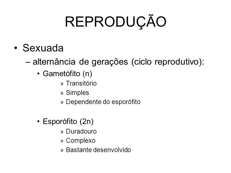 REPRODUÇÃO Sexuada –alternância de gerações (ciclo reprodutivo): Gametófito (n) »Transitório »Simples »Dependente do esporófito Esporófito (2n) »Durad