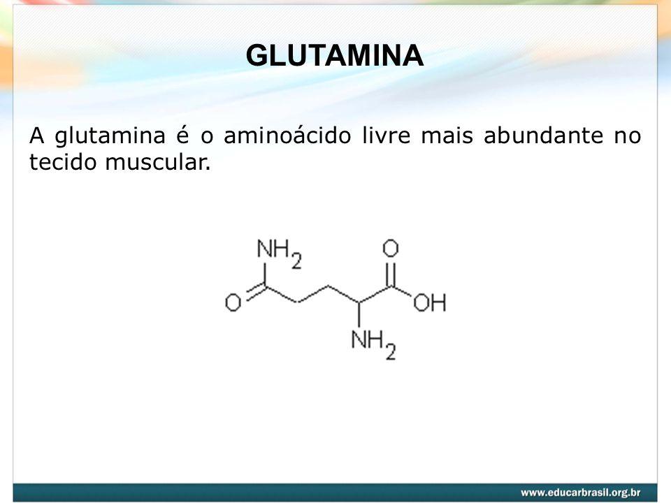 A glutamina é o aminoácido livre mais abundante no tecido muscular. GLUTAMINA