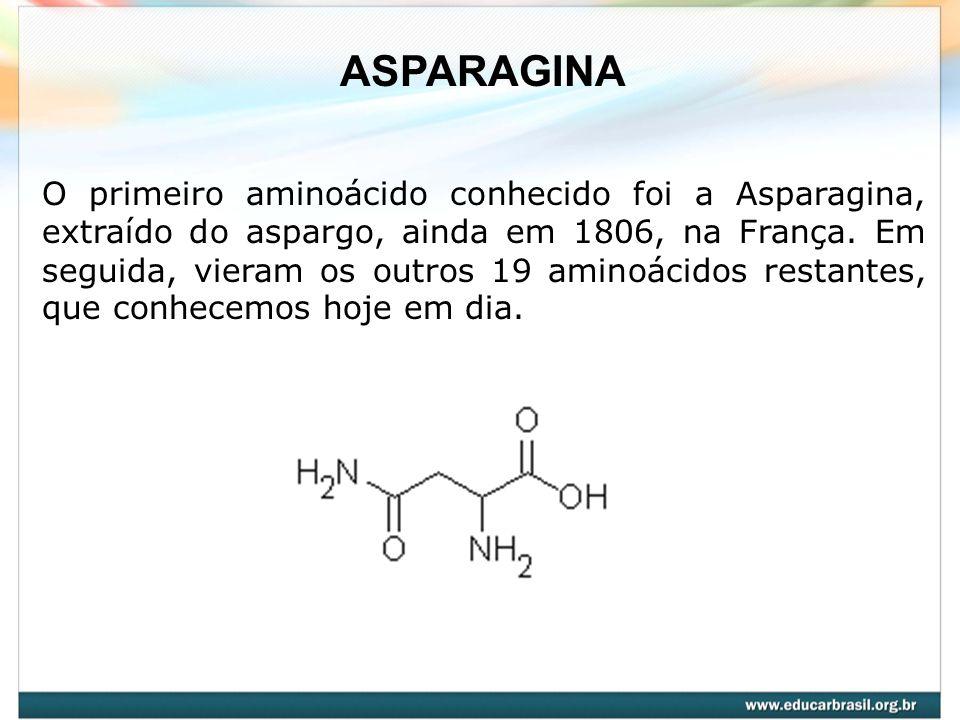 O primeiro aminoácido conhecido foi a Asparagina, extraído do aspargo, ainda em 1806, na França. Em seguida, vieram os outros 19 aminoácidos restantes