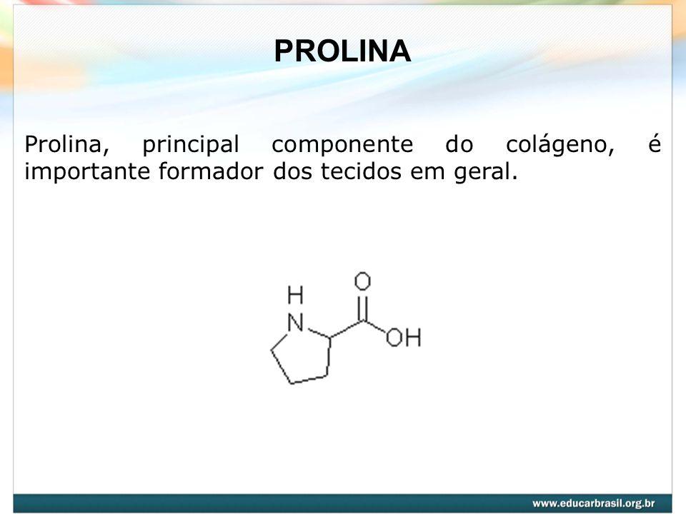 Prolina, principal componente do colágeno, é importante formador dos tecidos em geral. PROLINA