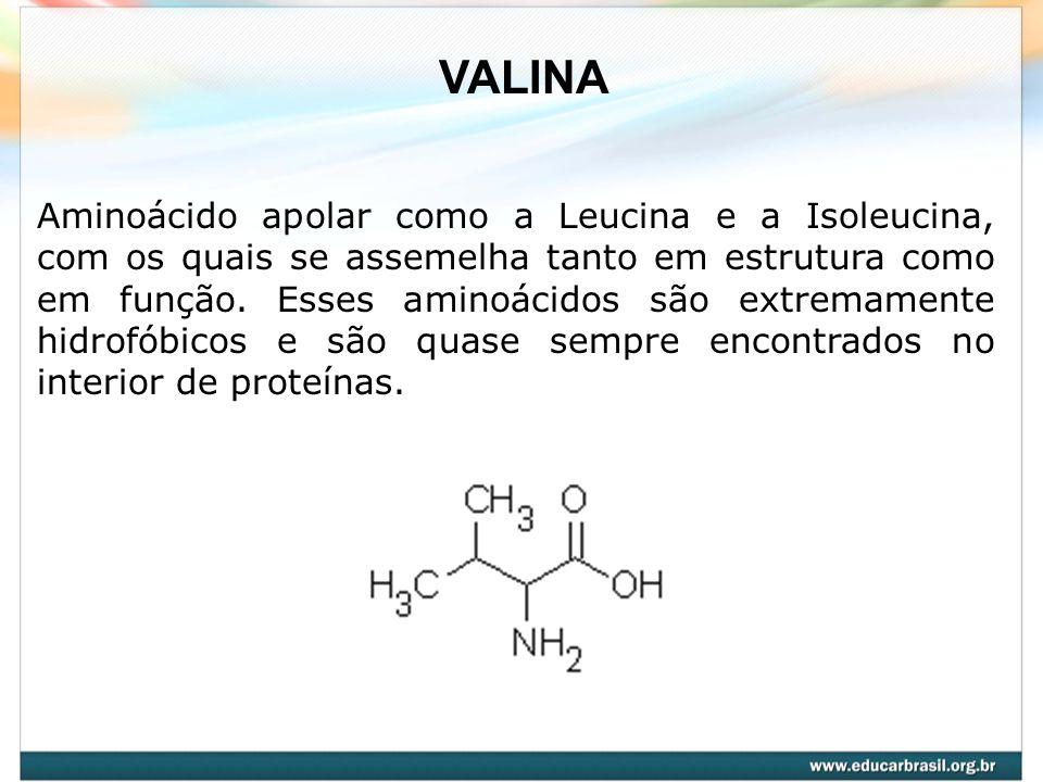 VALINA Aminoácido apolar como a Leucina e a Isoleucina, com os quais se assemelha tanto em estrutura como em função. Esses aminoácidos são extremament