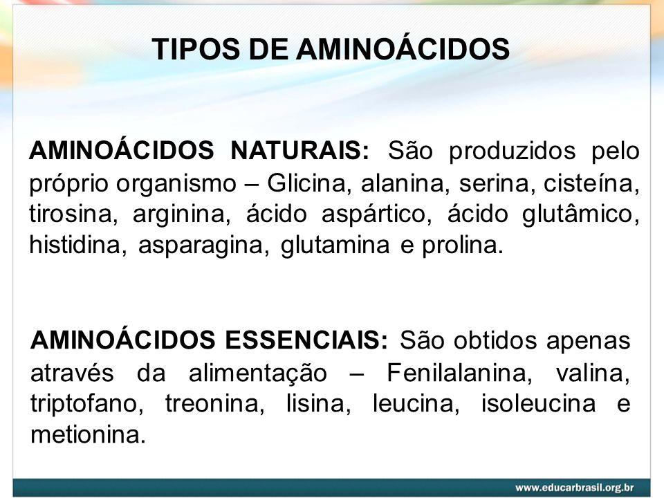 AMINOÁCIDOS NATURAIS: São produzidos pelo próprio organismo – Glicina, alanina, serina, cisteína, tirosina, arginina, ácido aspártico, ácido glutâmico
