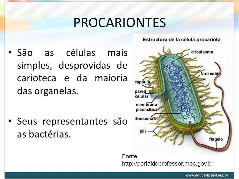 PROCARIONTES São as células mais simples, desprovidas de carioteca e da maioria das organelas. Seus representantes são as bactérias. Fonte: http://por