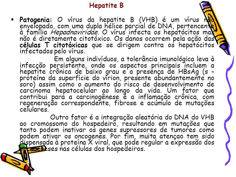 Hepatite B Patogenia: O vírus da hepatite B (VHB) é um vírus não envelopado, com uma dupla hélice parcial de DNA, pertencente à família Hepadnaviridae