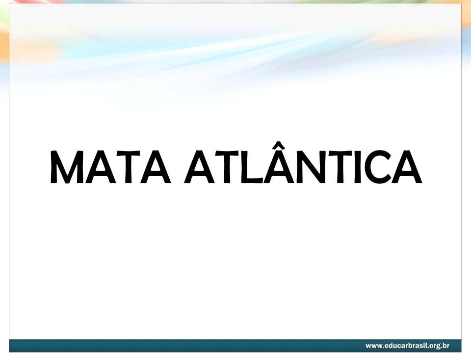 INTRODUÇÃO A Mata Atlântica, uma das maiores florestas tropicais do mundo, ocupava, em 1500, aproximadamente 15% do território brasileiro, nos seguintes estados: PI,CE, RN, PB, PE, AL, SE, BA, ES, RJ, MG, GO, MS, SP, PR, SC, RS.