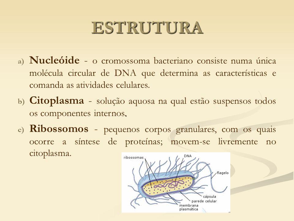 a) Nucleóide - o cromossoma bacteriano consiste numa única molécula circular de DNA que determina as características e comanda as atividades celulares