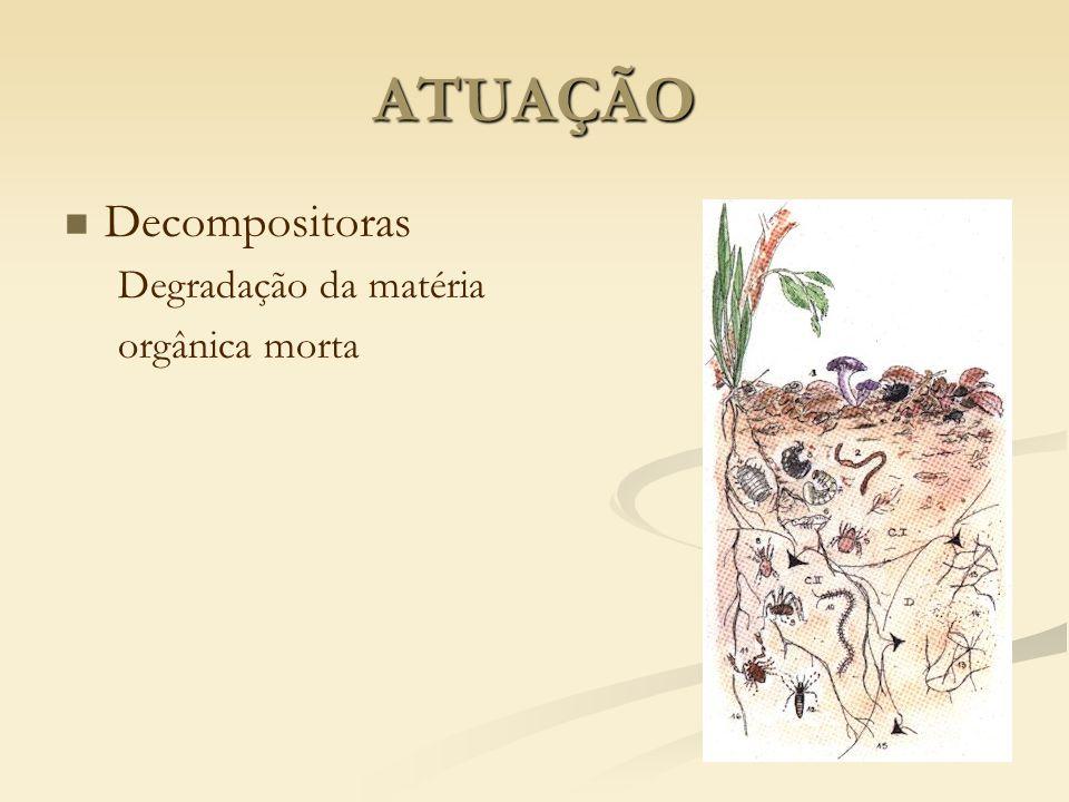 Decompositoras Degradação da matéria orgânica morta ATUAÇÃO