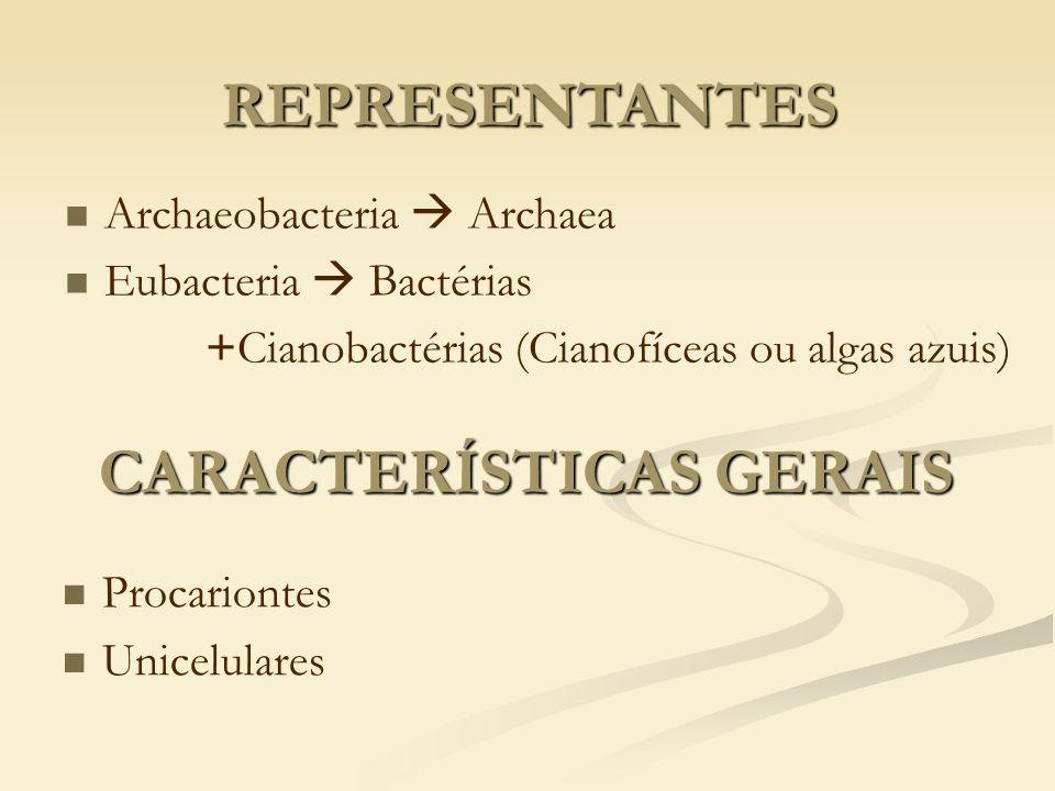 CARACTERÍSTICAS GERAIS Procariontes Unicelulares REPRESENTANTES Archaeobacteria Archaea Eubacteria Bactérias +Cianobactérias (Cianofíceas ou algas azu