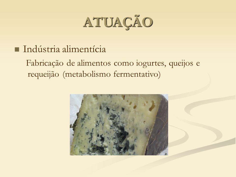 ATUAÇÃO Indústria alimentícia Fabricação de alimentos como iogurtes, queijos e requeijão (metabolismo fermentativo)