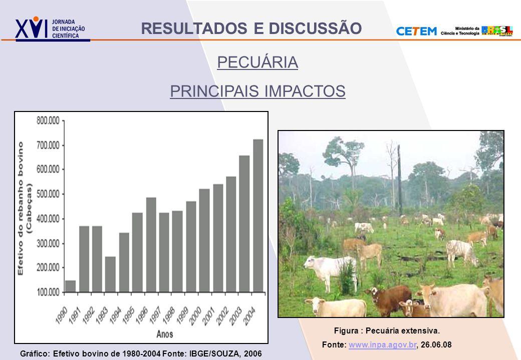 PECUÁRIA PRINCIPAIS IMPACTOS Figura : Pecuária extensiva. Fonte: www.inpa.agov.br, 26.06.08www.inpa.agov.br Gráfico: Efetivo bovino de 1980-2004 Fonte