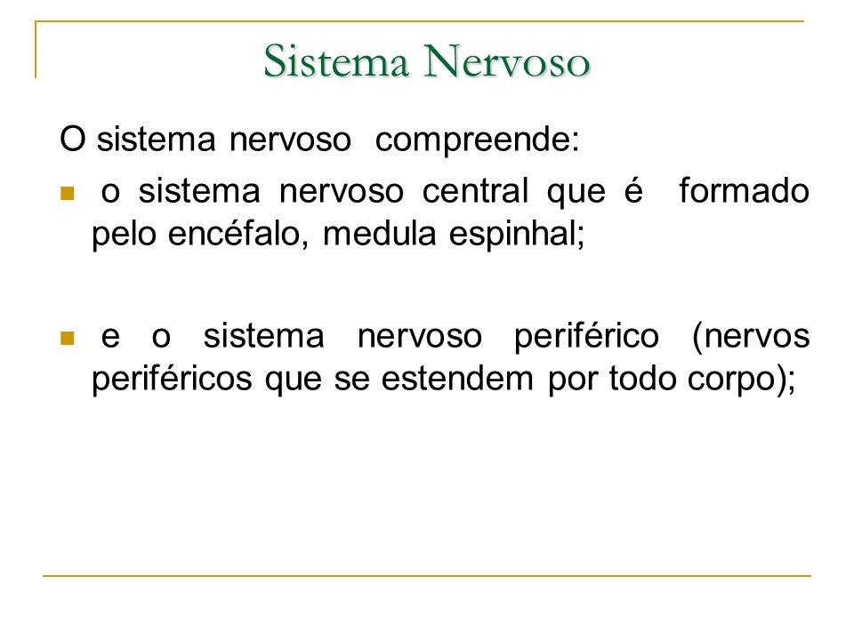 Sistema Nervoso O sistema nervoso compreende: o sistema nervoso central que é formado pelo encéfalo, medula espinhal; e o sistema nervoso periférico (