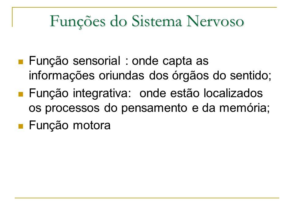 Funções do Sistema Nervoso Função sensorial : onde capta as informações oriundas dos órgãos do sentido; Função integrativa: onde estão localizados os