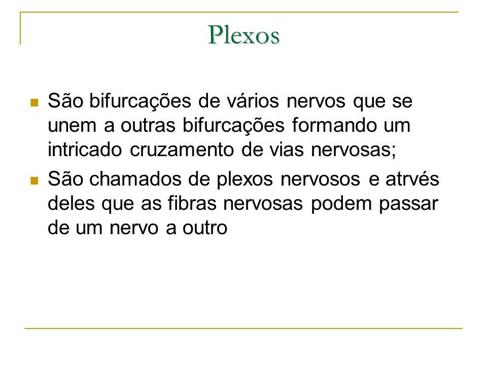 Plexos São bifurcações de vários nervos que se unem a outras bifurcações formando um intricado cruzamento de vias nervosas; São chamados de plexos ner