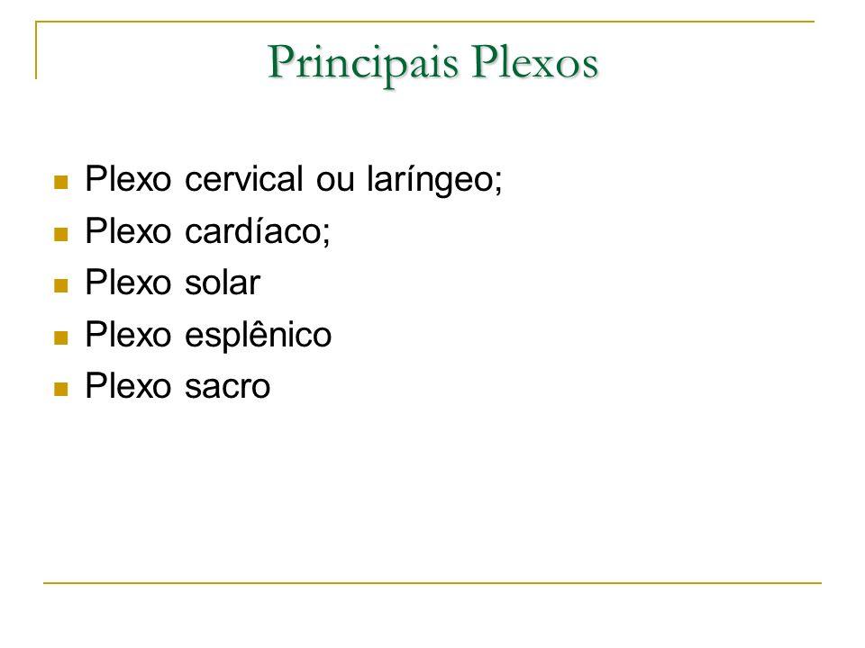Principais Plexos Plexo cervical ou laríngeo; Plexo cardíaco; Plexo solar Plexo esplênico Plexo sacro