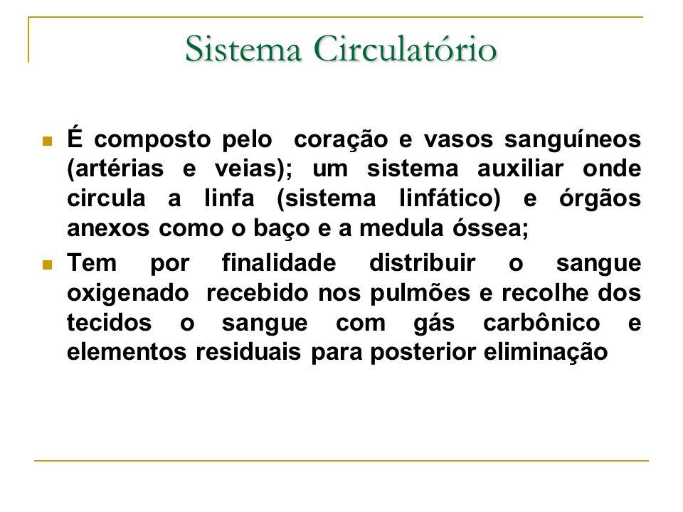 Sistema Circulatório É composto pelo coração e vasos sanguíneos (artérias e veias); um sistema auxiliar onde circula a linfa (sistema linfático) e órg