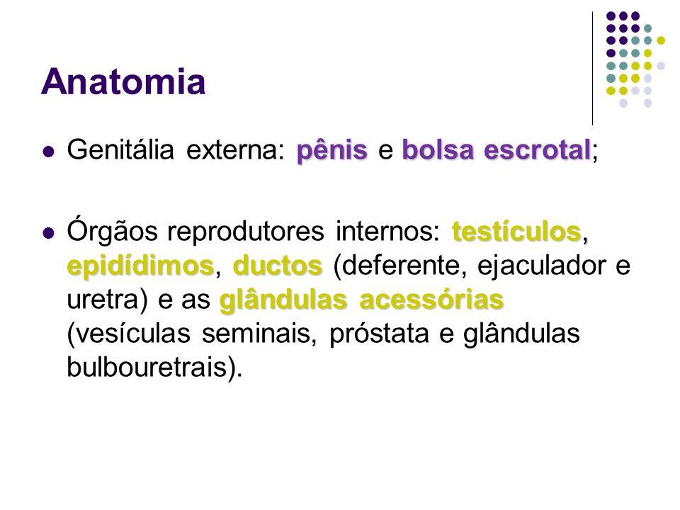Anatomia pênisbolsa escrotal Genitália externa: pênis e bolsa escrotal; testículos, epidídimosductos glândulas acessórias Órgãos reprodutores internos: testículos, epidídimos, ductos (deferente, ejaculador e uretra) e as glândulas acessórias (vesículas seminais, próstata e glândulas bulbouretrais).