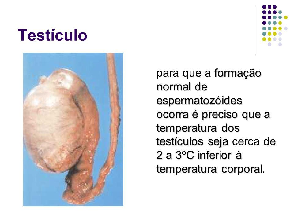 Próstata Secreção leitosa e alcalina motilidade neutralização Secreção leitosa e alcalina motilidade dos espermatozóides e neutralização das secreções vaginais; sêmen Compõe o sêmen.