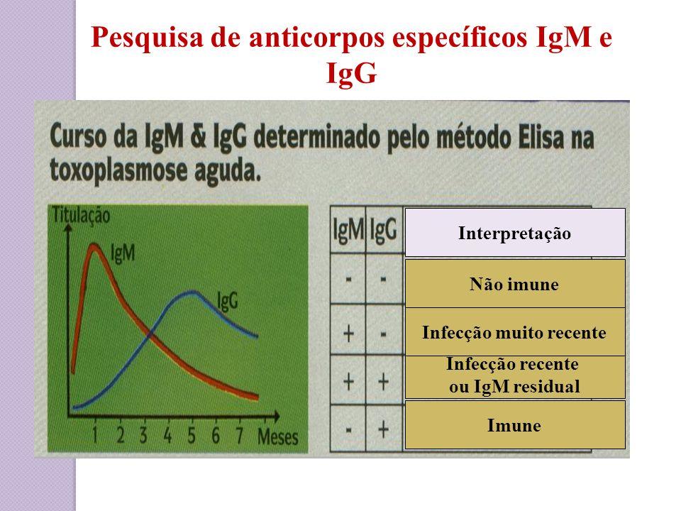 Pesquisa de anticorpos específicos IgM e IgG Infecção recente ou IgM residual Imune Não imune Infecção muito recente Interpretação
