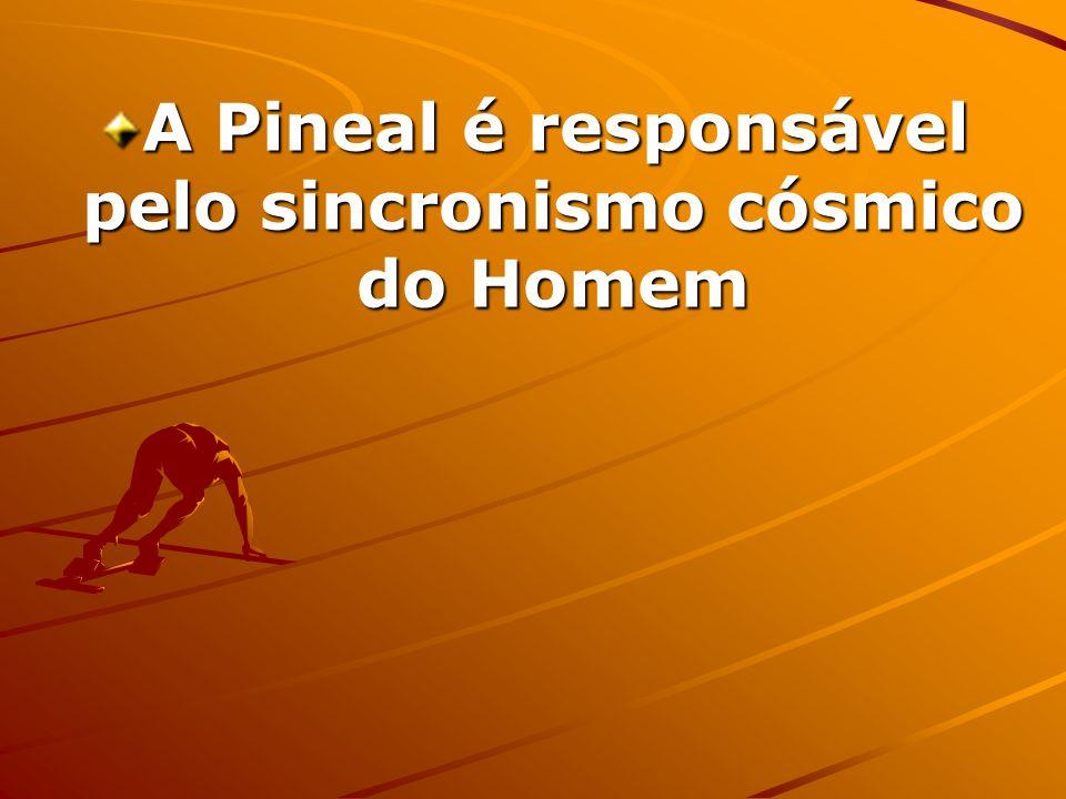 A Pineal é responsável pelo sincronismo cósmico do Homem