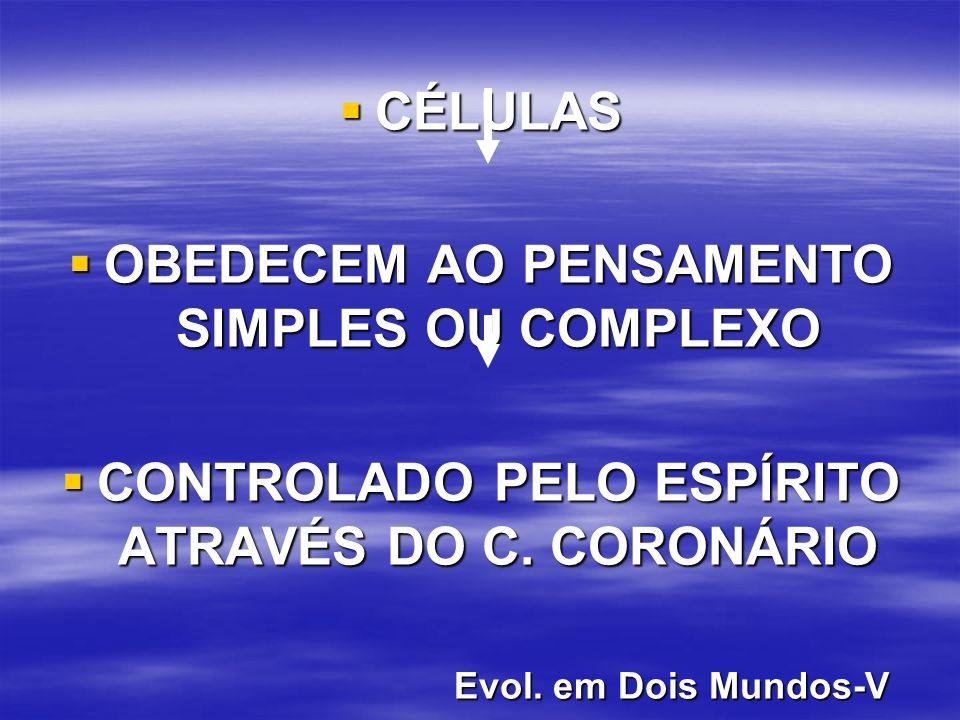 CÉLULAS CÉLULAS OBEDECEM AO PENSAMENTO SIMPLES OU COMPLEXO OBEDECEM AO PENSAMENTO SIMPLES OU COMPLEXO CONTROLADO PELO ESPÍRITO ATRAVÉS DO C.
