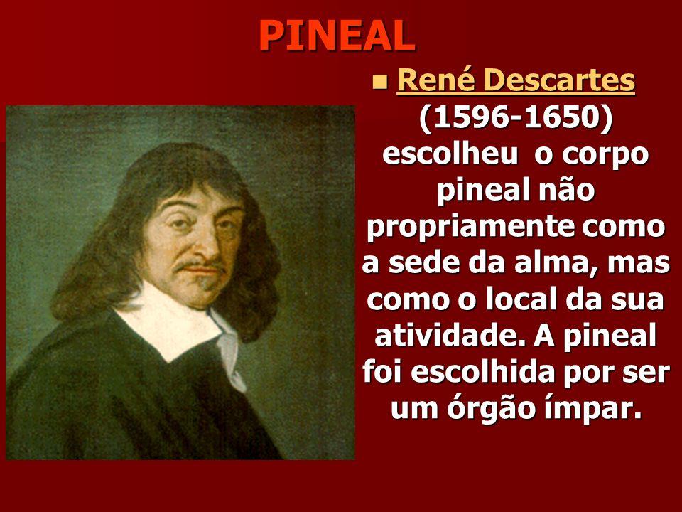 PINEAL René Descartes (1596-1650) escolheu o corpo pineal não propriamente como a sede da alma, mas como o local da sua atividade.
