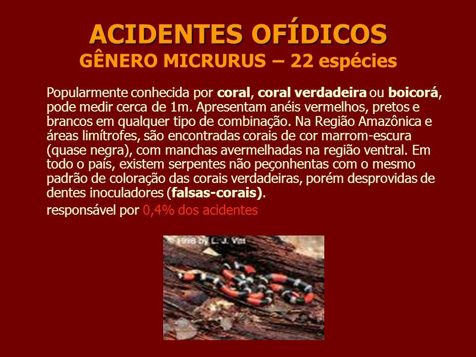 ACIDENTES OFÍDICOS ACIDENTES OFÍDICOS GÊNERO MICRURUS – 22 espécies Popularmente conhecida por coral, coral verdadeira ou boicorá, pode medir cerca de