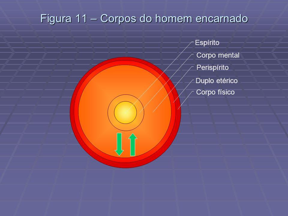 Figura 11 – Corpos do homem encarnado Espírito Corpo mental Perispírito Duplo etérico Corpo físico