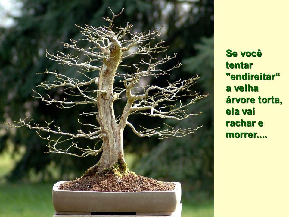 Se você tentar endireitar a velha árvore torta, ela vai rachar e morrer....