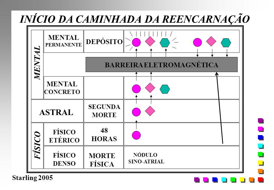 Starling 2005 INÍCIO DA CAMINHADA DA REENCARNAÇÃO FÍSICO DENSO FÍSICO ETÉRICO ASTRAL MENTAL CONCRETO MORTE FÍSICA 48 HORAS BARREIRA ELETROMAGNÉTICA NÓ
