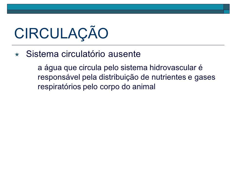 DIGESTÃO Lanterna de Aristóteles herbivoria