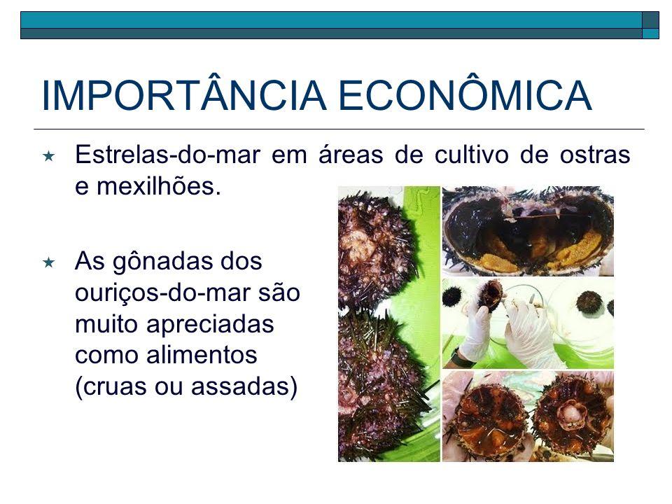 IMPORTÂNCIA ECOLÓGICA Estrelas-do-mar carnívoros de topo do hábitat. Indicadores biológicos presença em águas doces – intrusão salina.