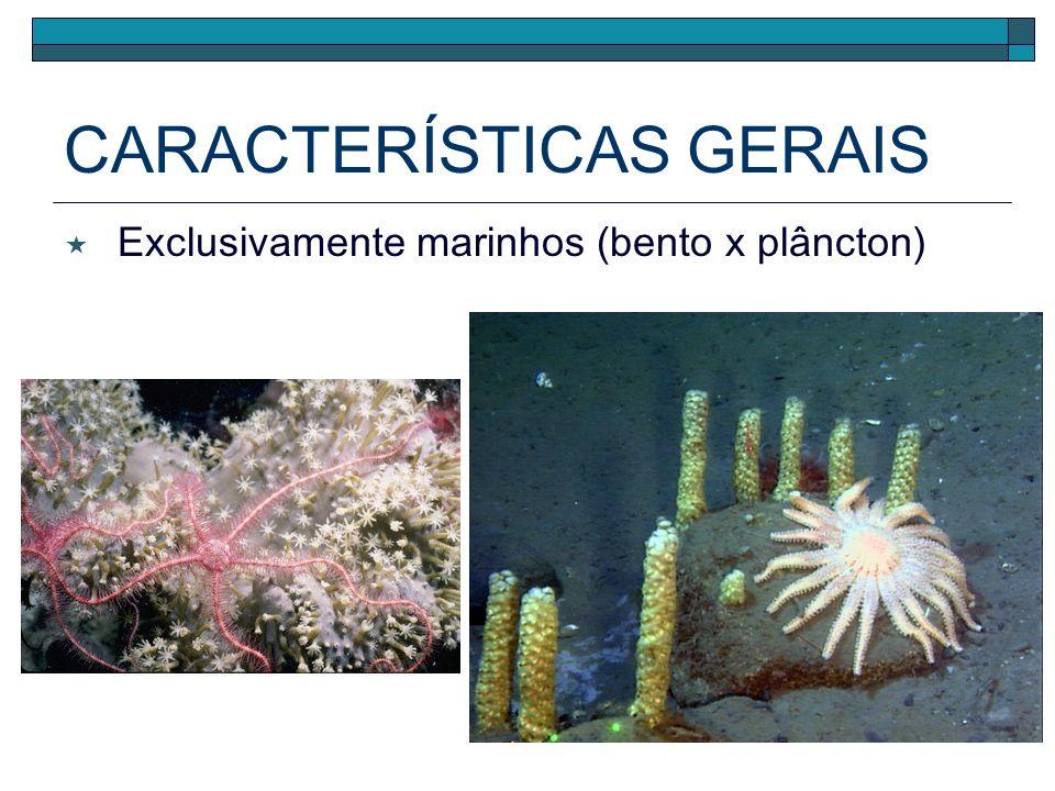CLASSIFICAÇÃO Asteroidea (estrelas-do-mar) Echinoidea (ouriços-do-mar e bolachas-da-praia) Holothuroidea (pepinos-do-mar) Crinoidea (lírios-do-mar) Ophiuroidea (serpentes-do-mar)